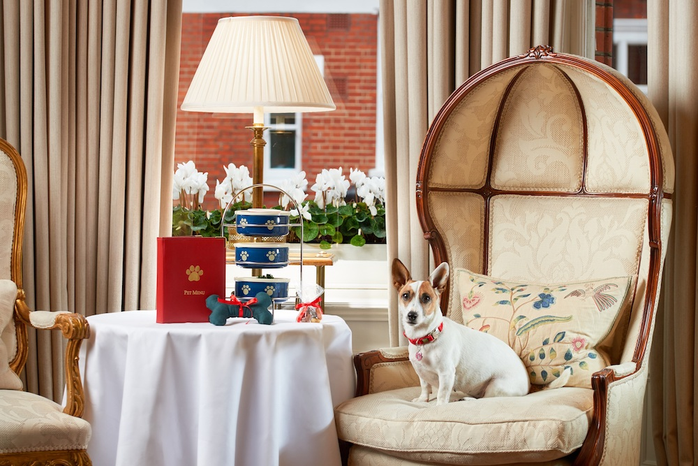 a dog at afternoon tea at The Egerton House Hotel