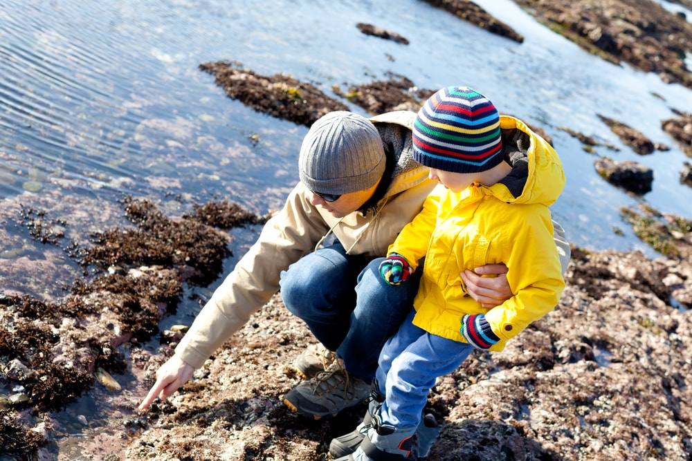 parent and child discovering rock pool