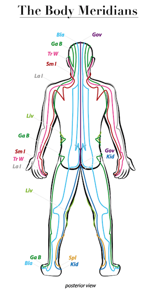 This is an image of the body meridians from the back