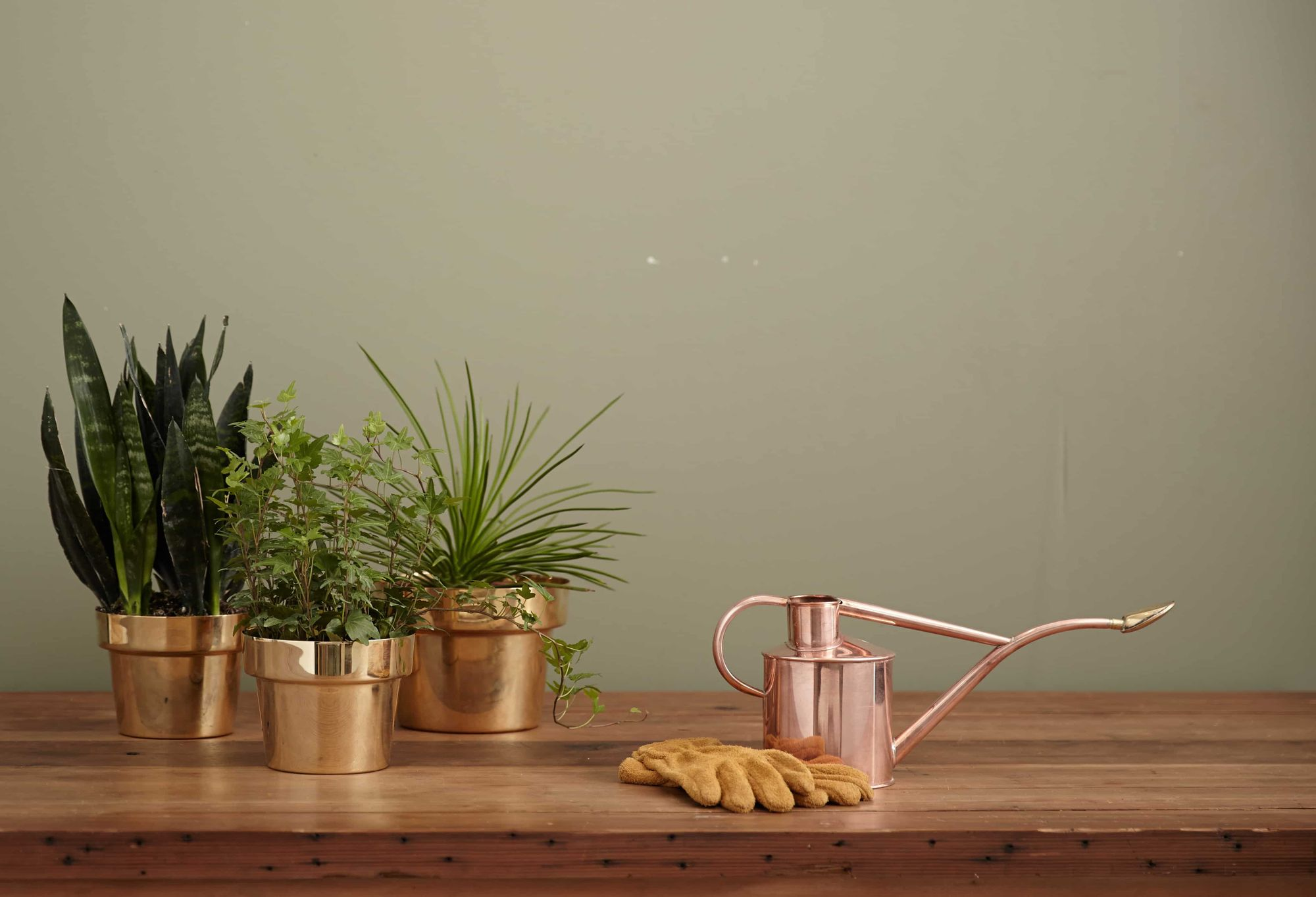 house plants on table next to gardening gloves and watering can