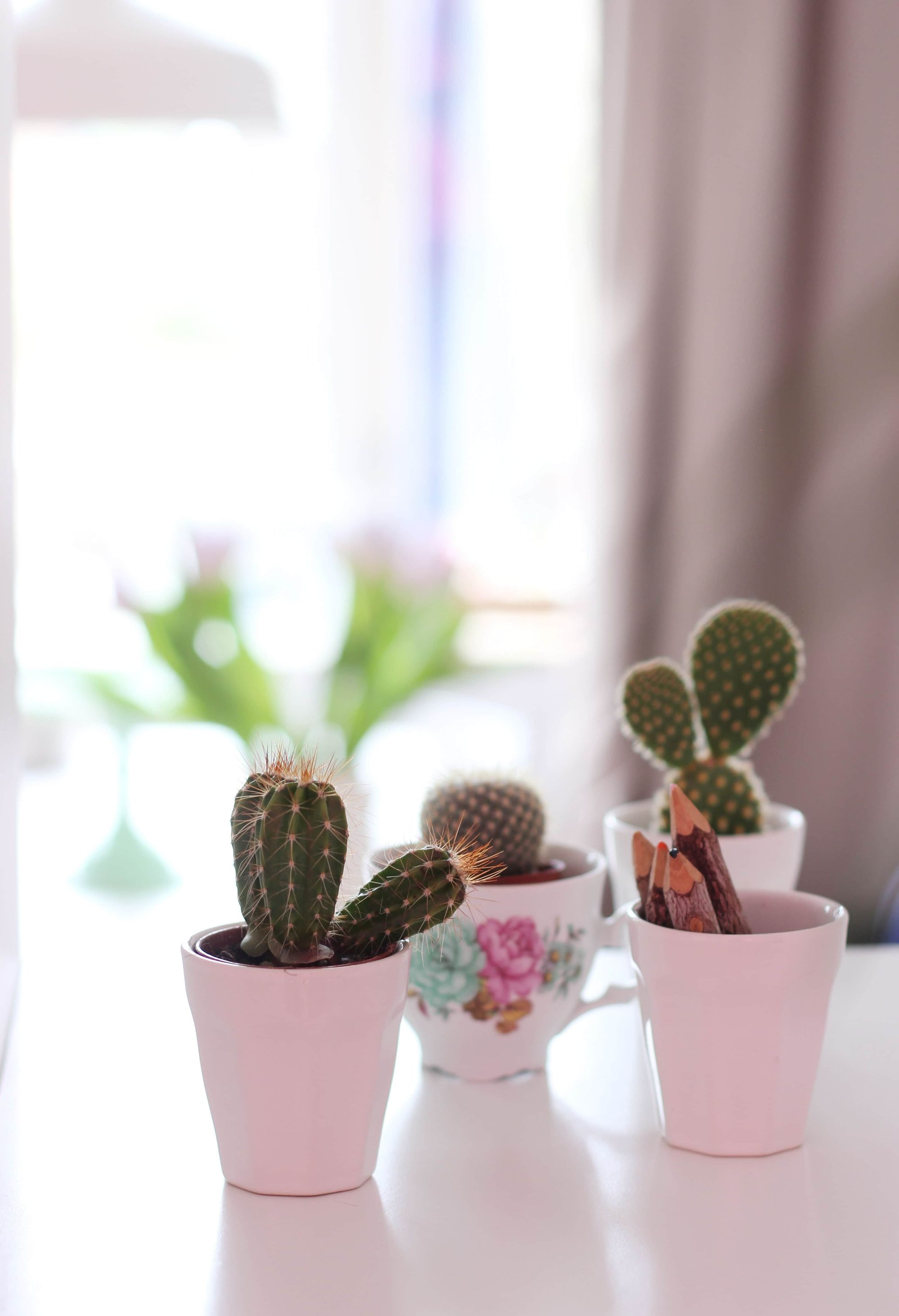 succulent plants in pots on desk