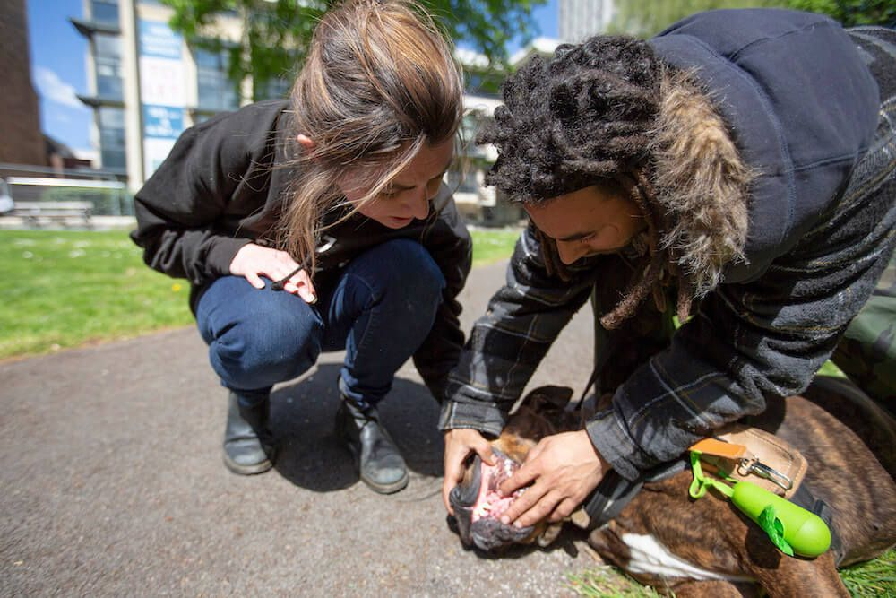 StreetVet team member checking on a dog