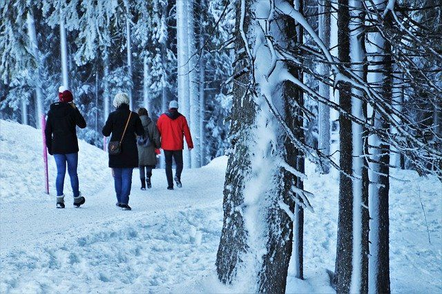 A family walks together through snowy trees