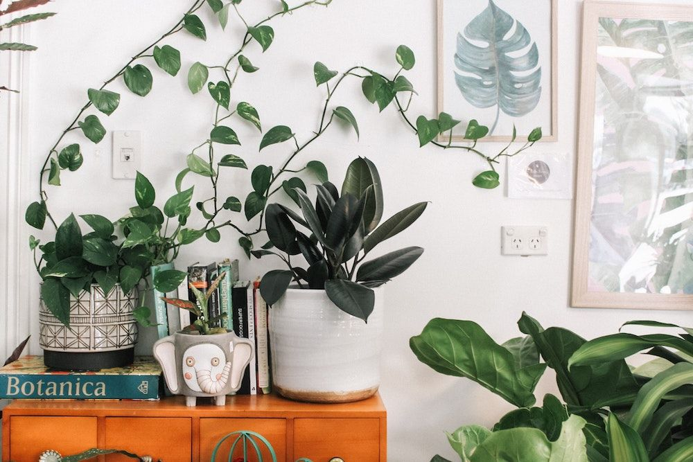 Healthy houseplants to bring the outside in