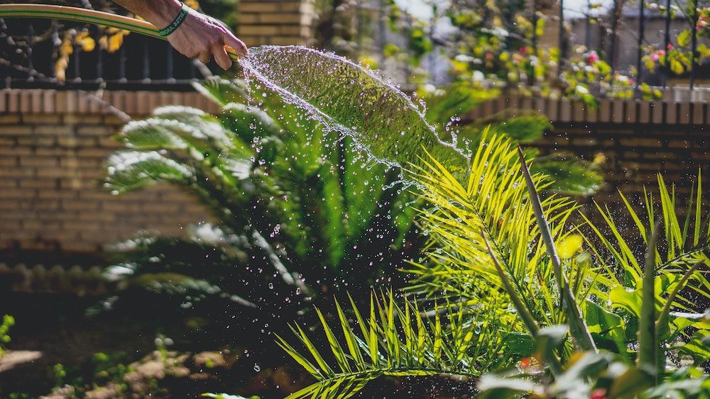 How to create a mindful garden