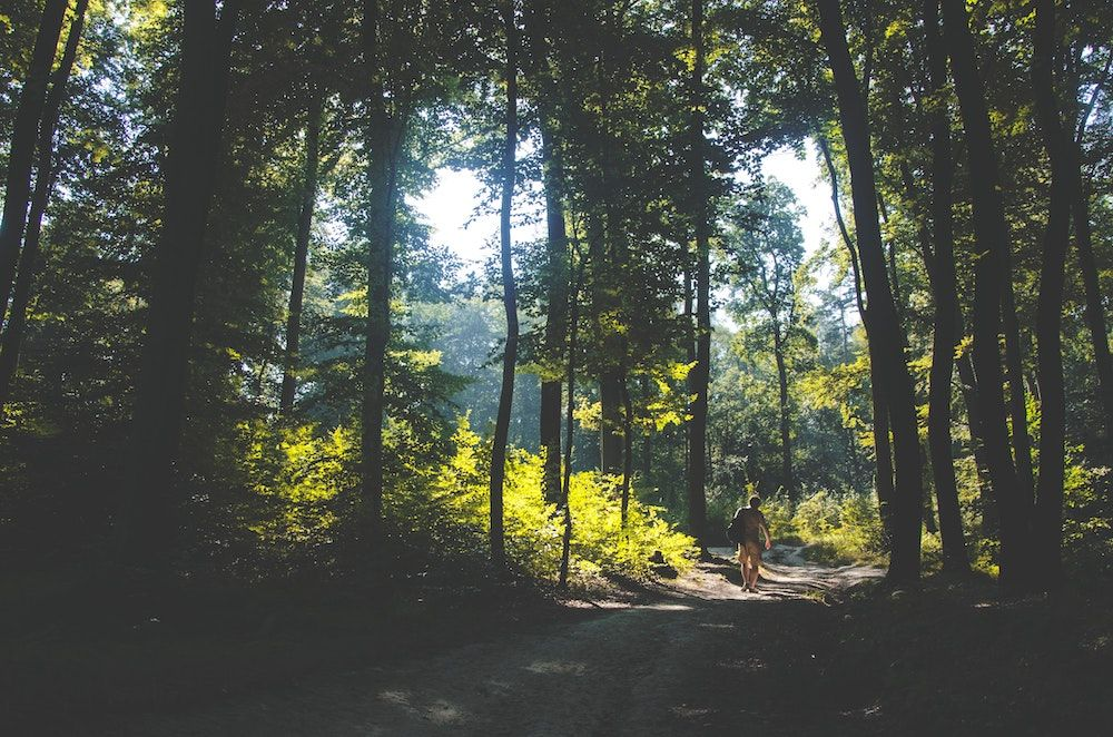 5 wellbeing benefits of forest bathing