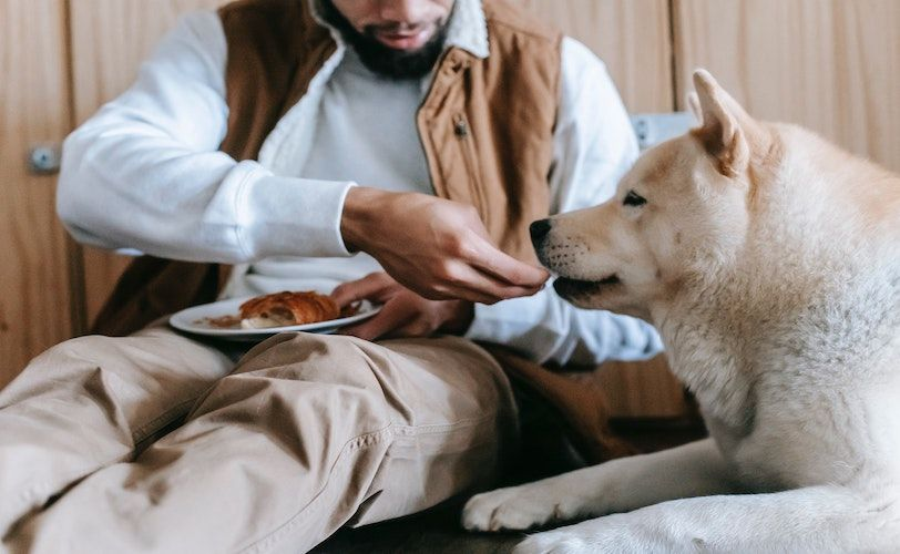 Dogs are able to decipher human intention, study finds